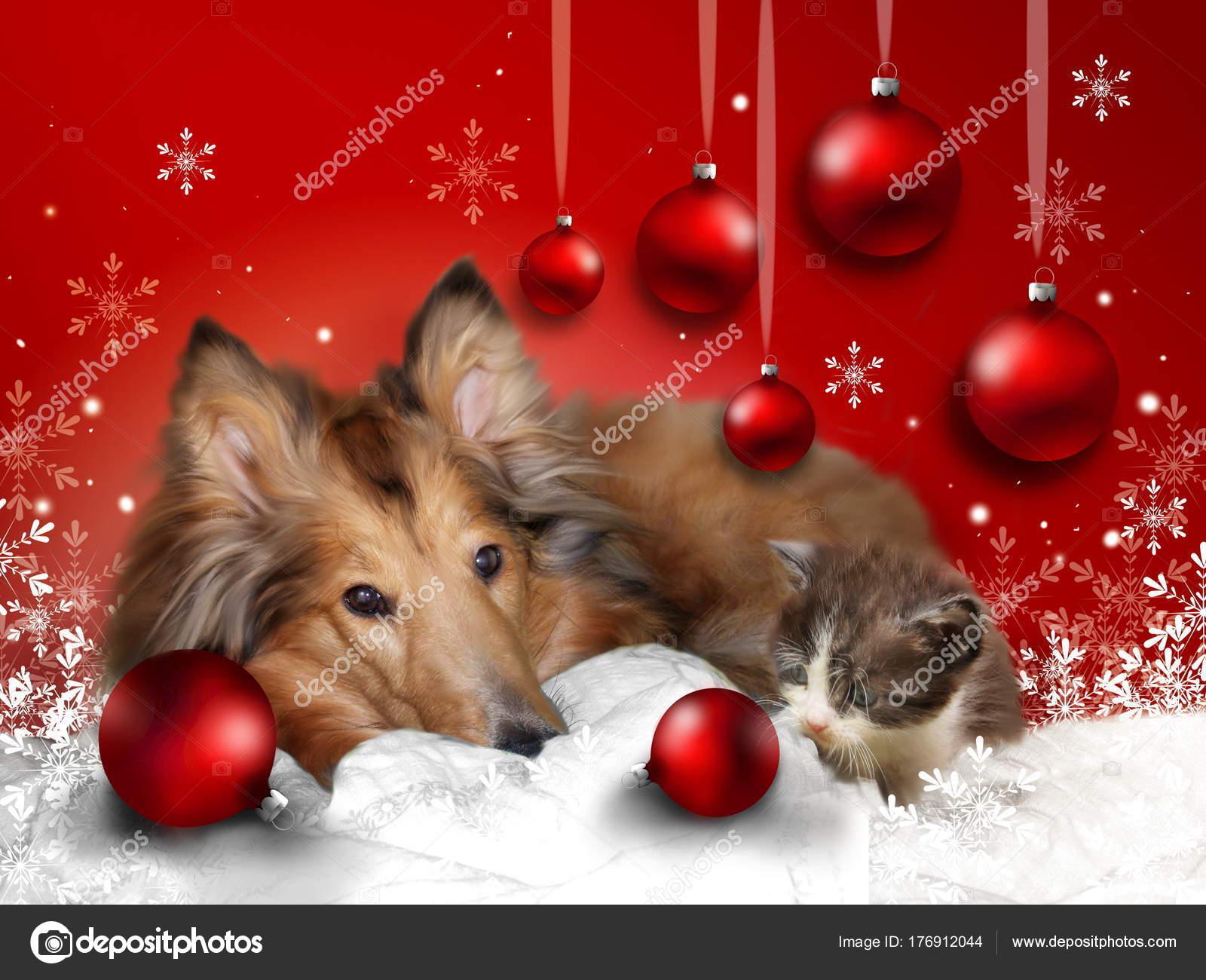 Foto Di Natale Con Cani.Immagini Auguri Di Natale Con Cani E Gatti Cartolina D