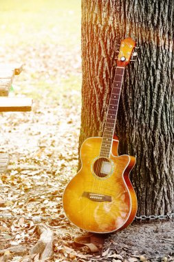 guitar leaning on tree trunk in park