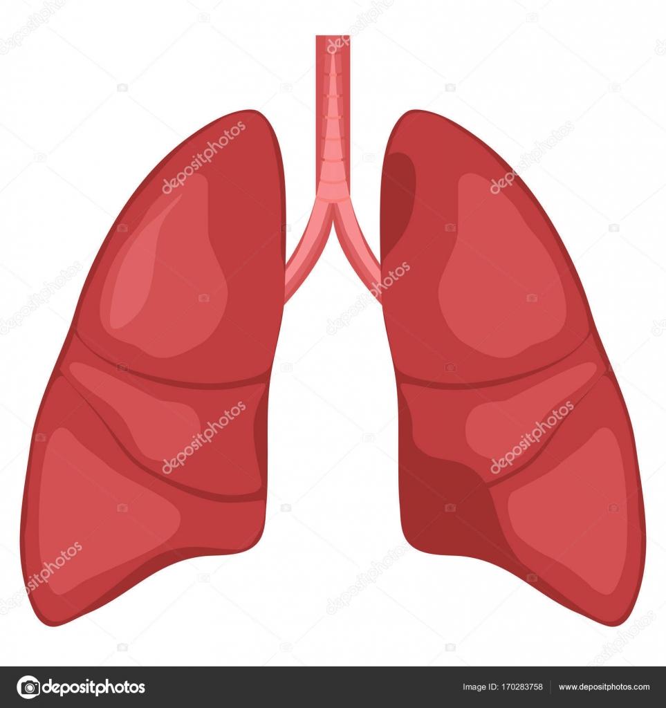 Diagrama de anatomía de pulmón humano — Archivo Imágenes Vectoriales ...