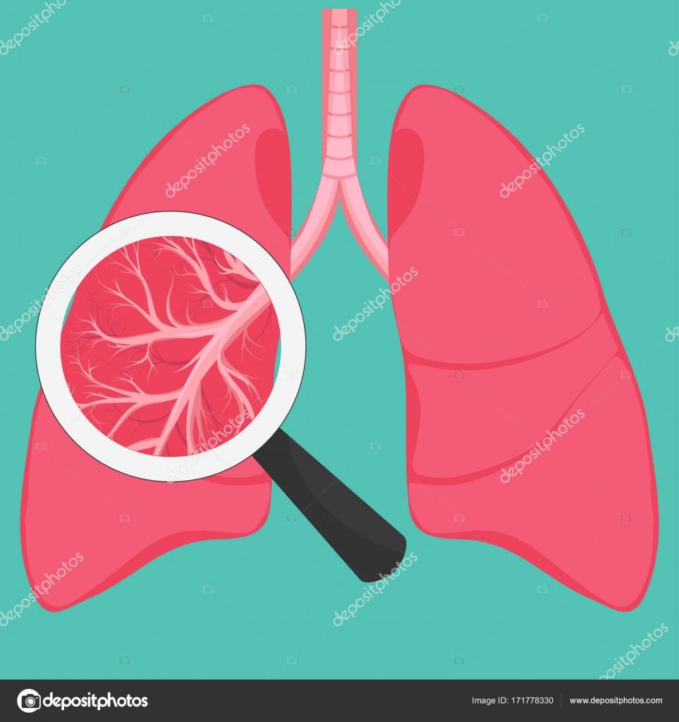 Menschliche Lunge Anatomie Diagramm — Stockvektor © ambassador80 ...