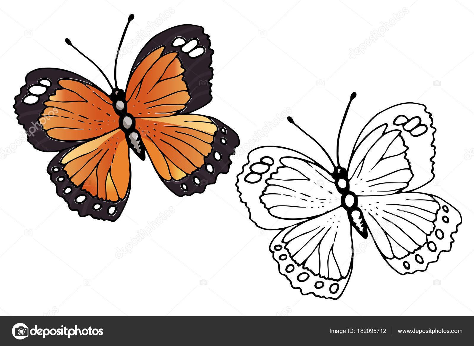 Imágenes Una Mariposa Monarca Para Colorear Mariposa Para