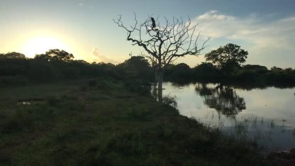 Yala, Srí Lanka, tó a napfelkelte ellen
