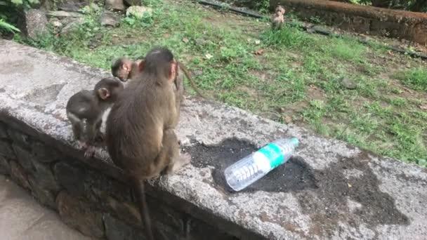Bombaj, Indie - Opice hrají na hřišti část 4