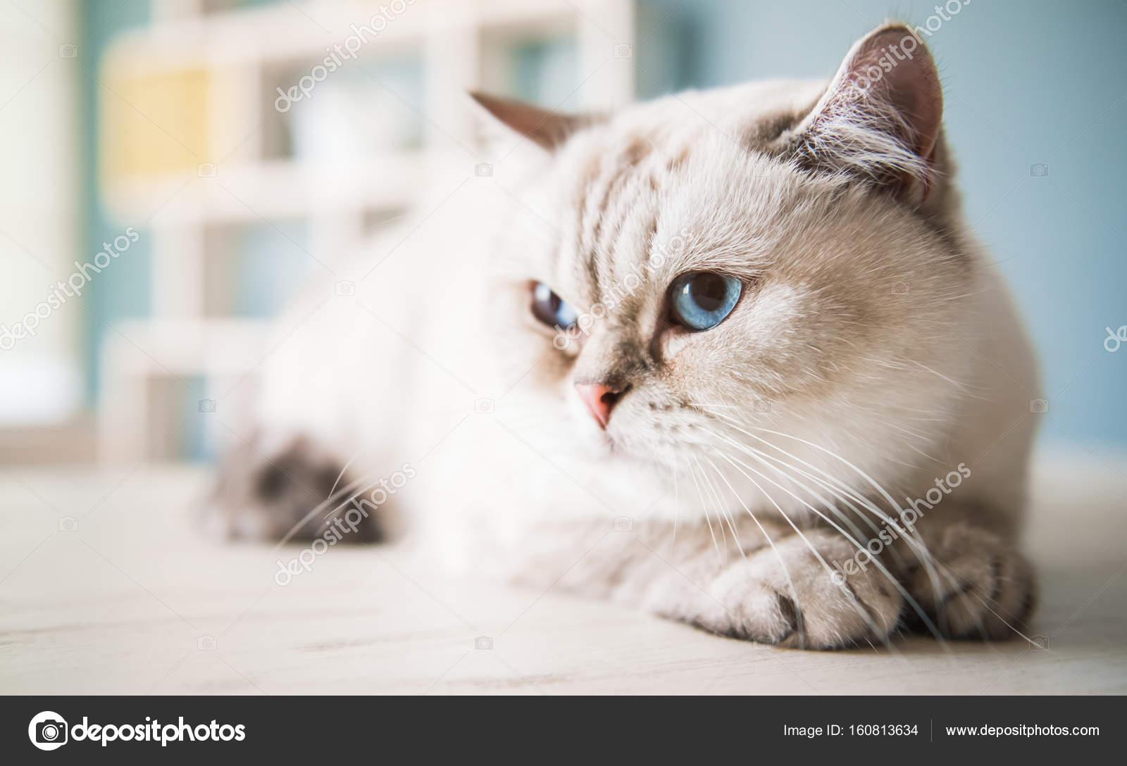sex chlupatá kočička