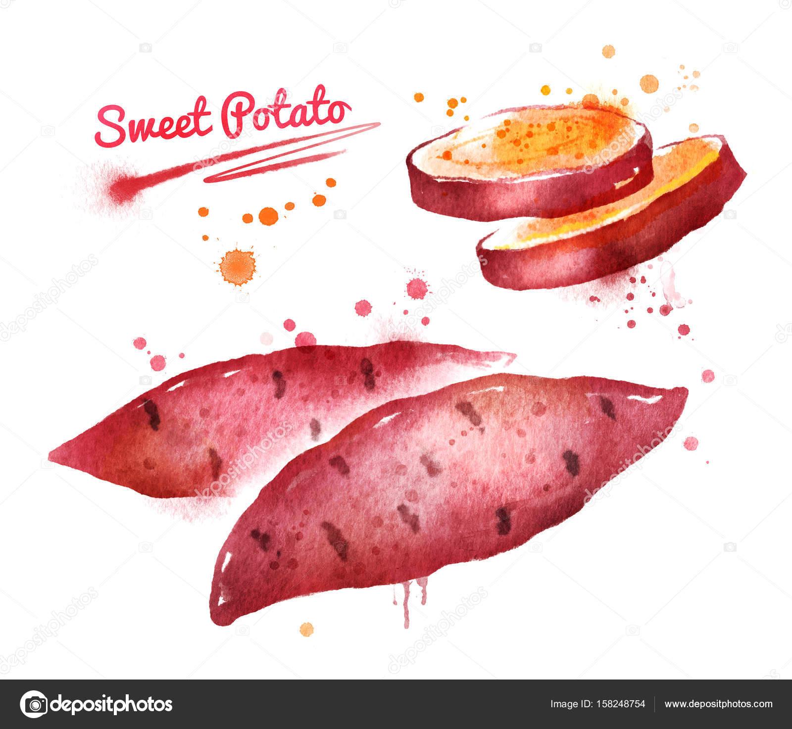 サツマイモの水彩イラスト ストック写真 Sonyaillustration 158248754