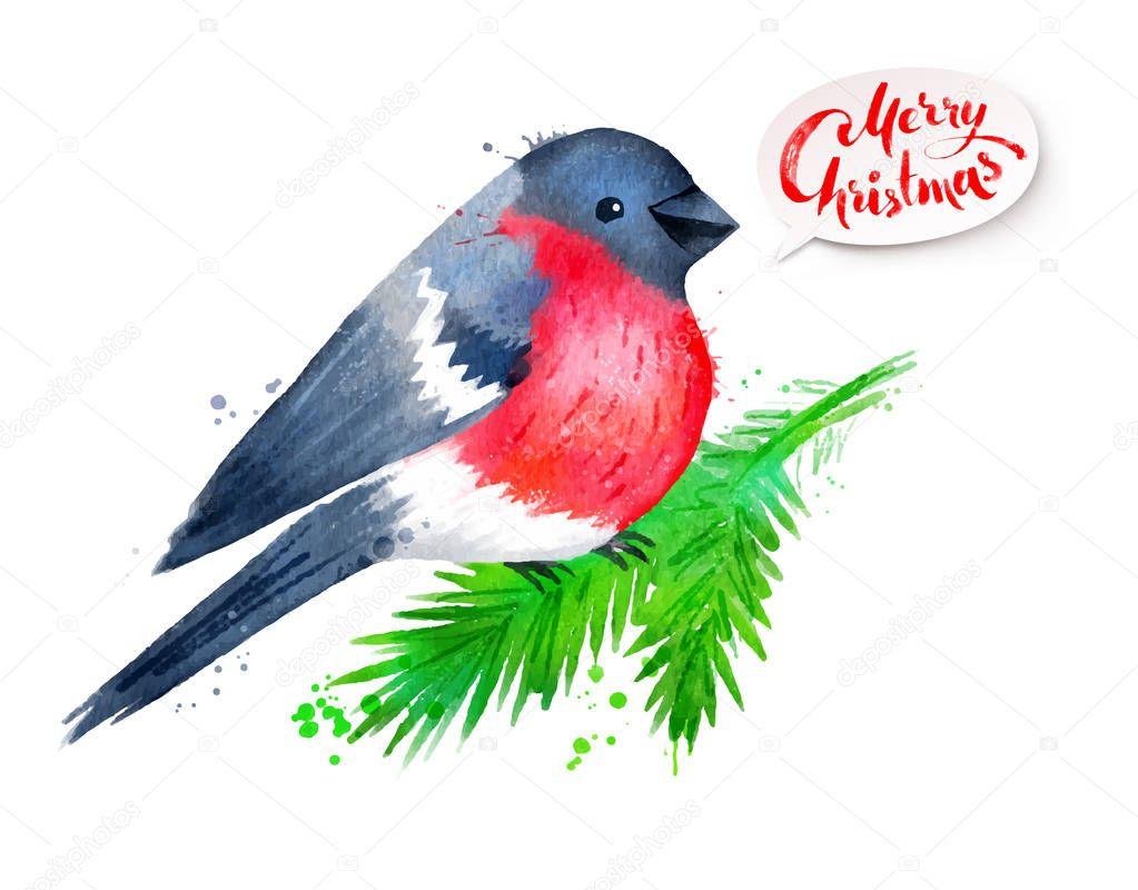 Christmas watercolor illustration of bullfinch