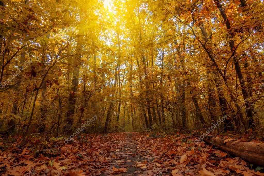 otoño paisajes de atardecer — Fotos de Stock © ba1istic #128419104