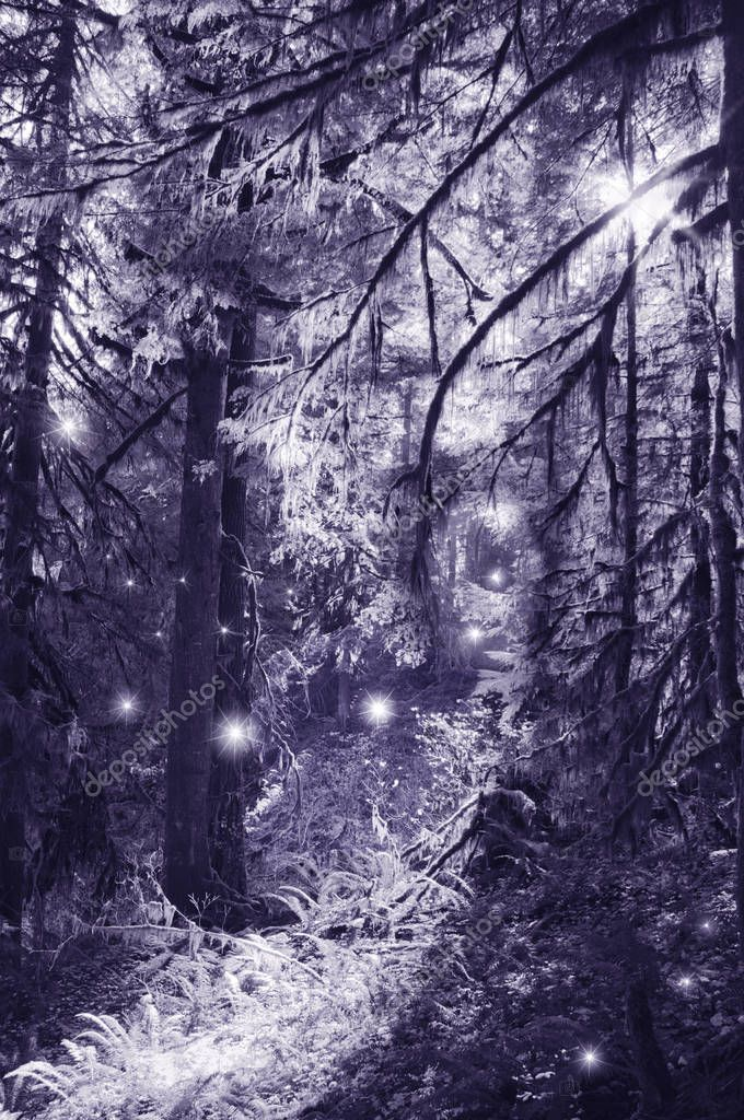 Fairies in moonlight dancing in the magical forest