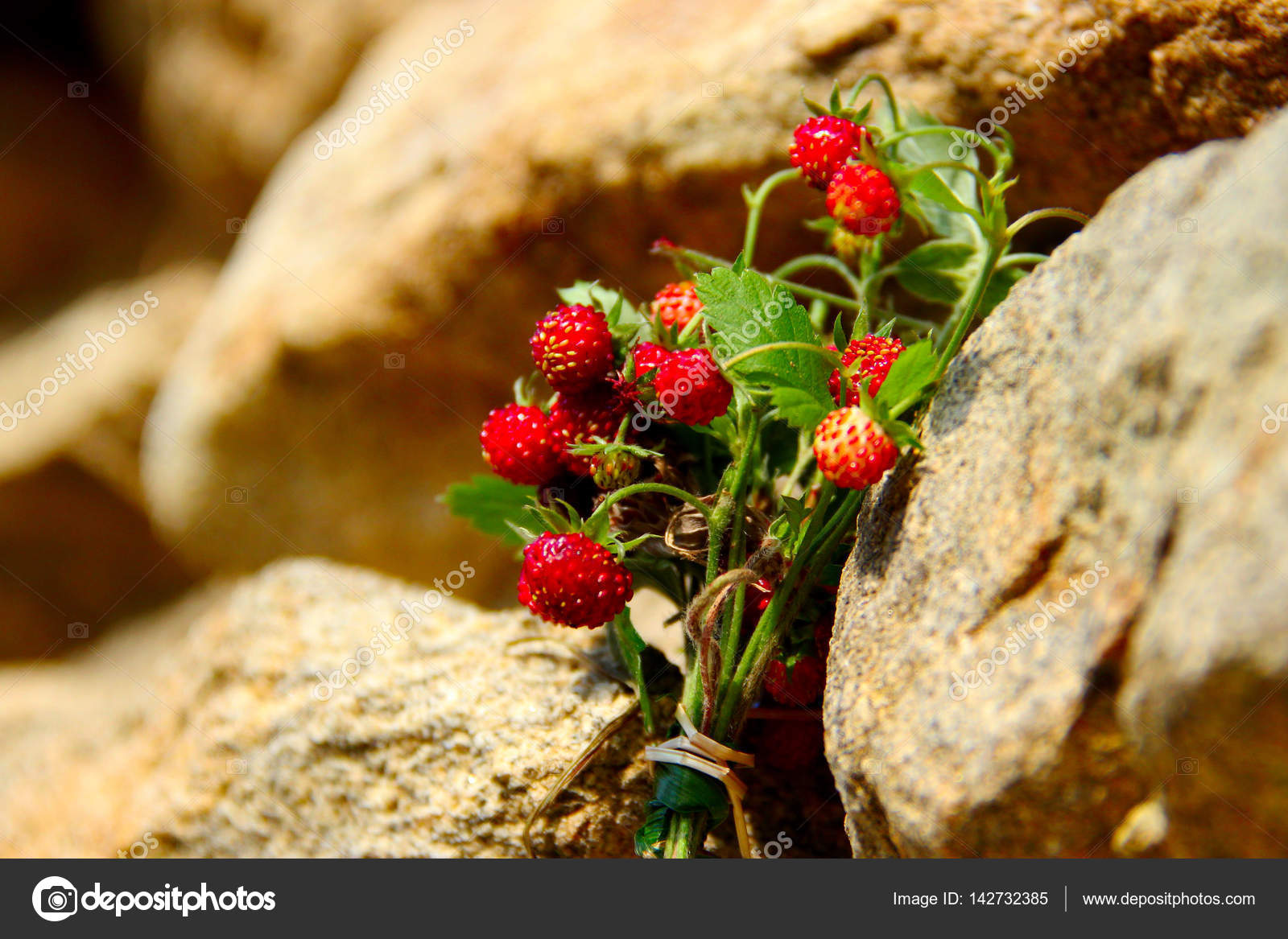 Fresh forest strawberries on an old stone wall — Stock Photo ...