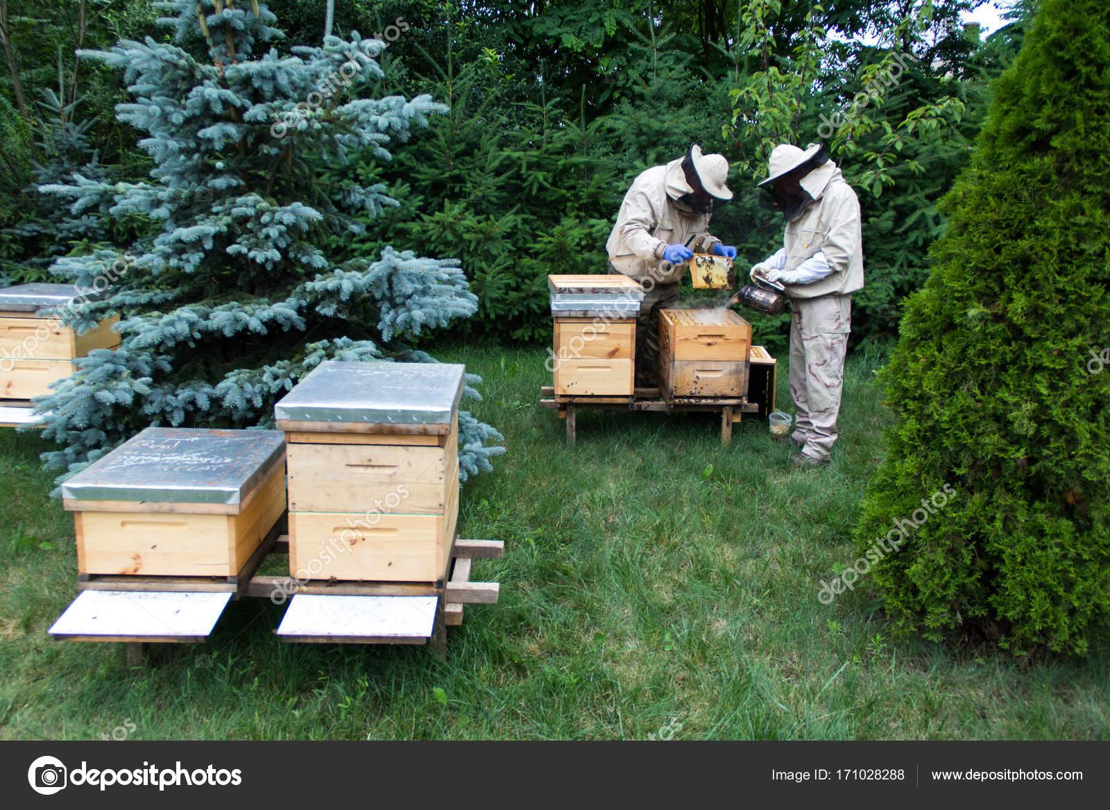 apiculteur 1000 ruches