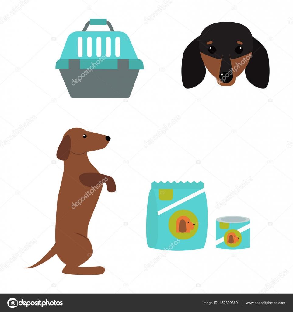 40e5e5d300bc Γελοιογραφία σκυλάκι αξιολάτρευτο αναζητούν φυλή σκύλου παρουσίαση αξεσουάρ  — Διάνυσμα με ...