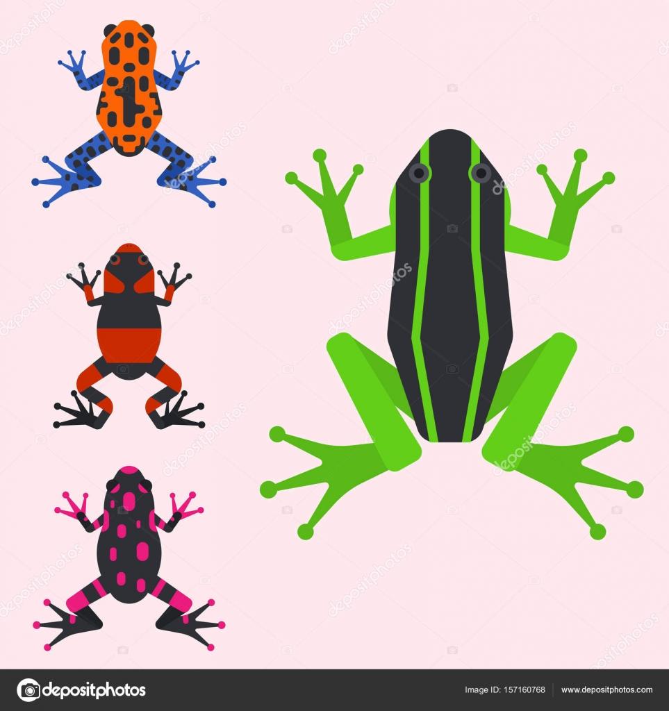 Sapo Desenho Animado Desenhos Animados Animais Tropicais