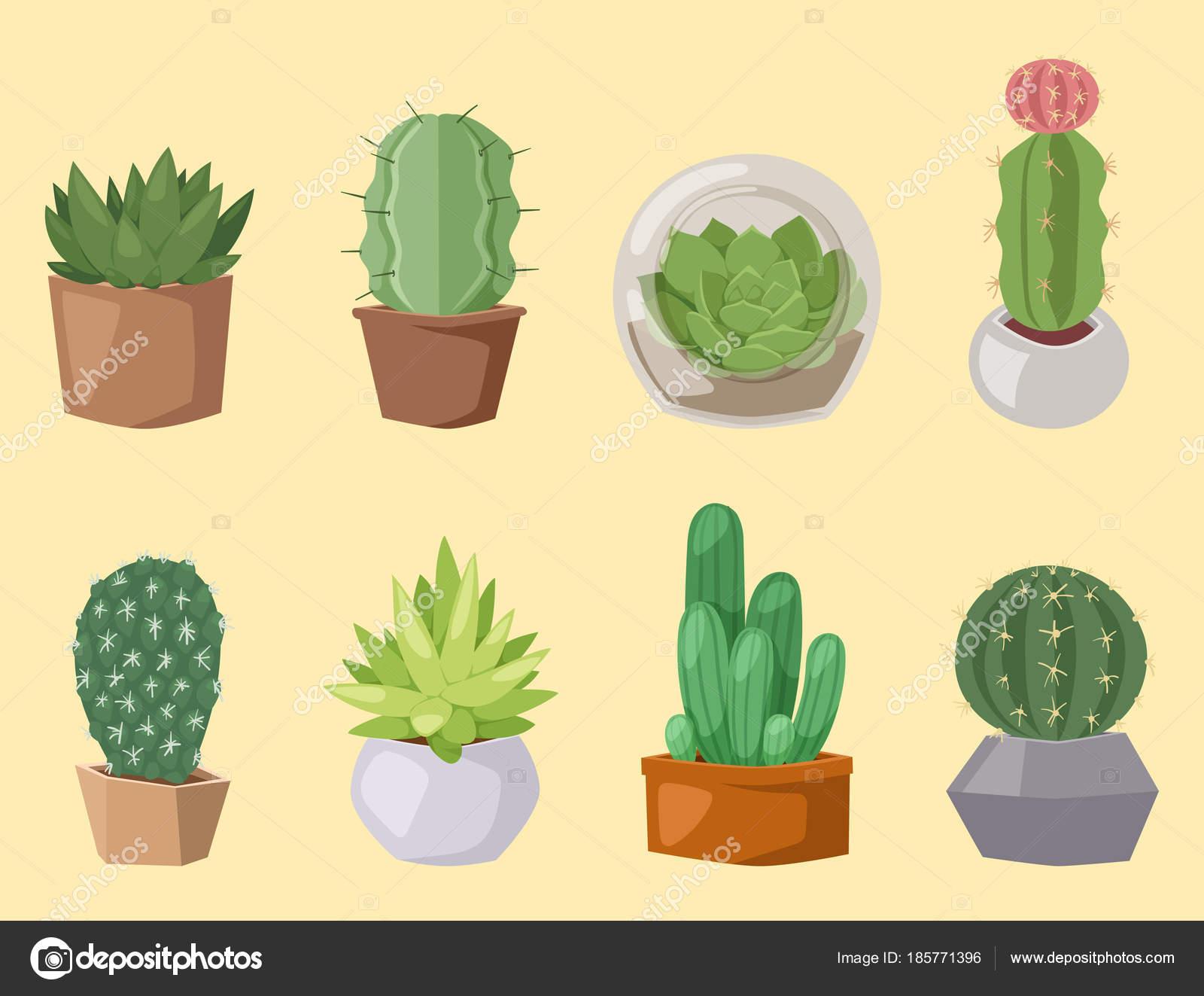 サボテン自然砂漠の花緑メキシコ ジューシーな熱帯植物のサボテンの花の