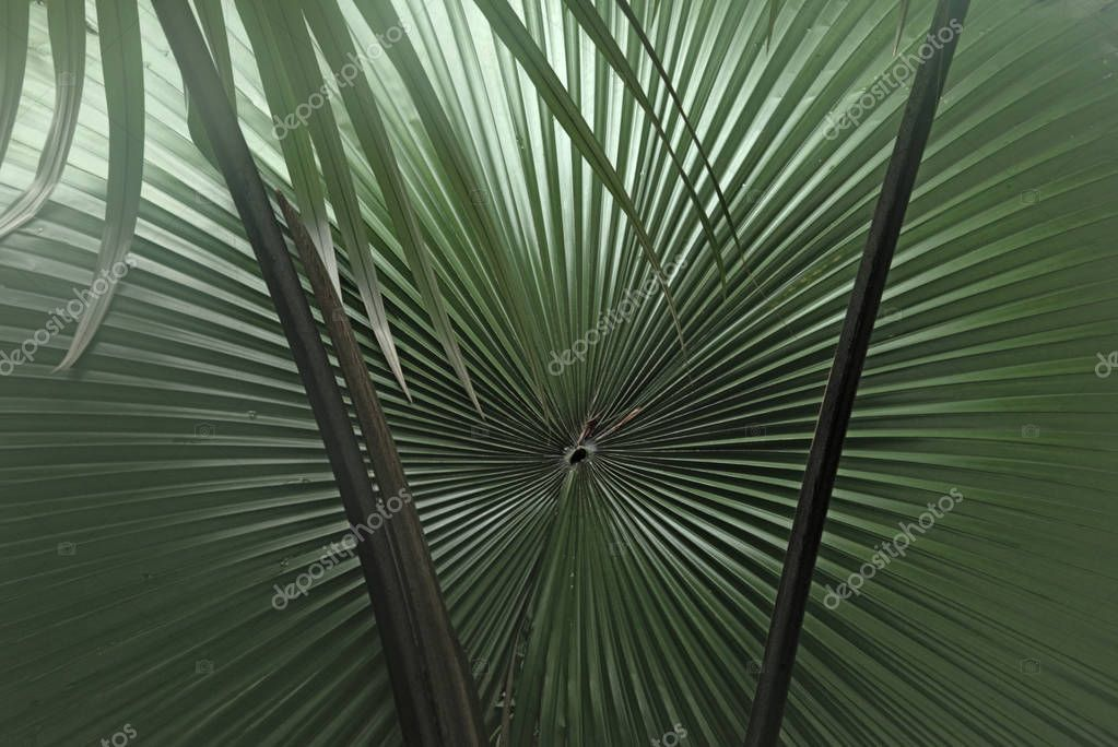 The leaf of a palm tree in the backlight