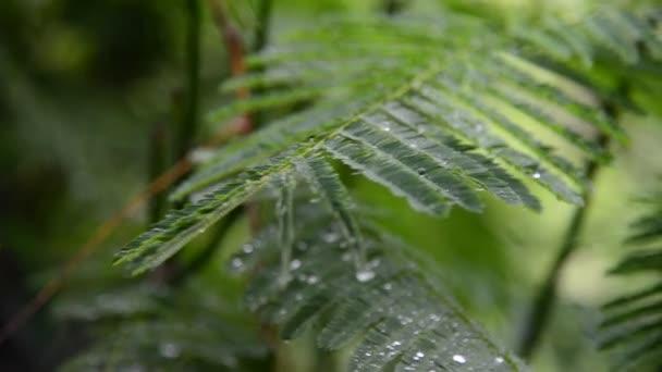 Prší s zelenou přírodou
