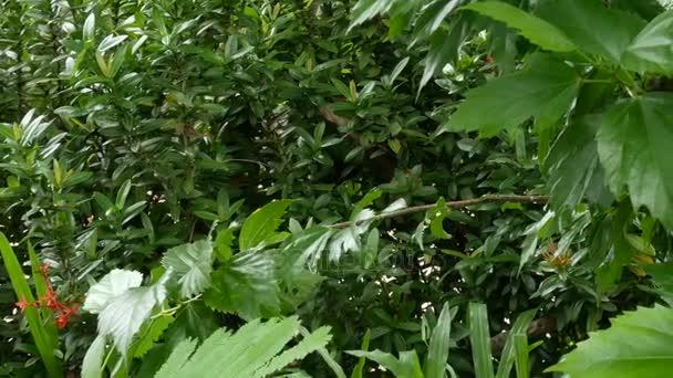 Detailní záběr na pozadí zelené přírody