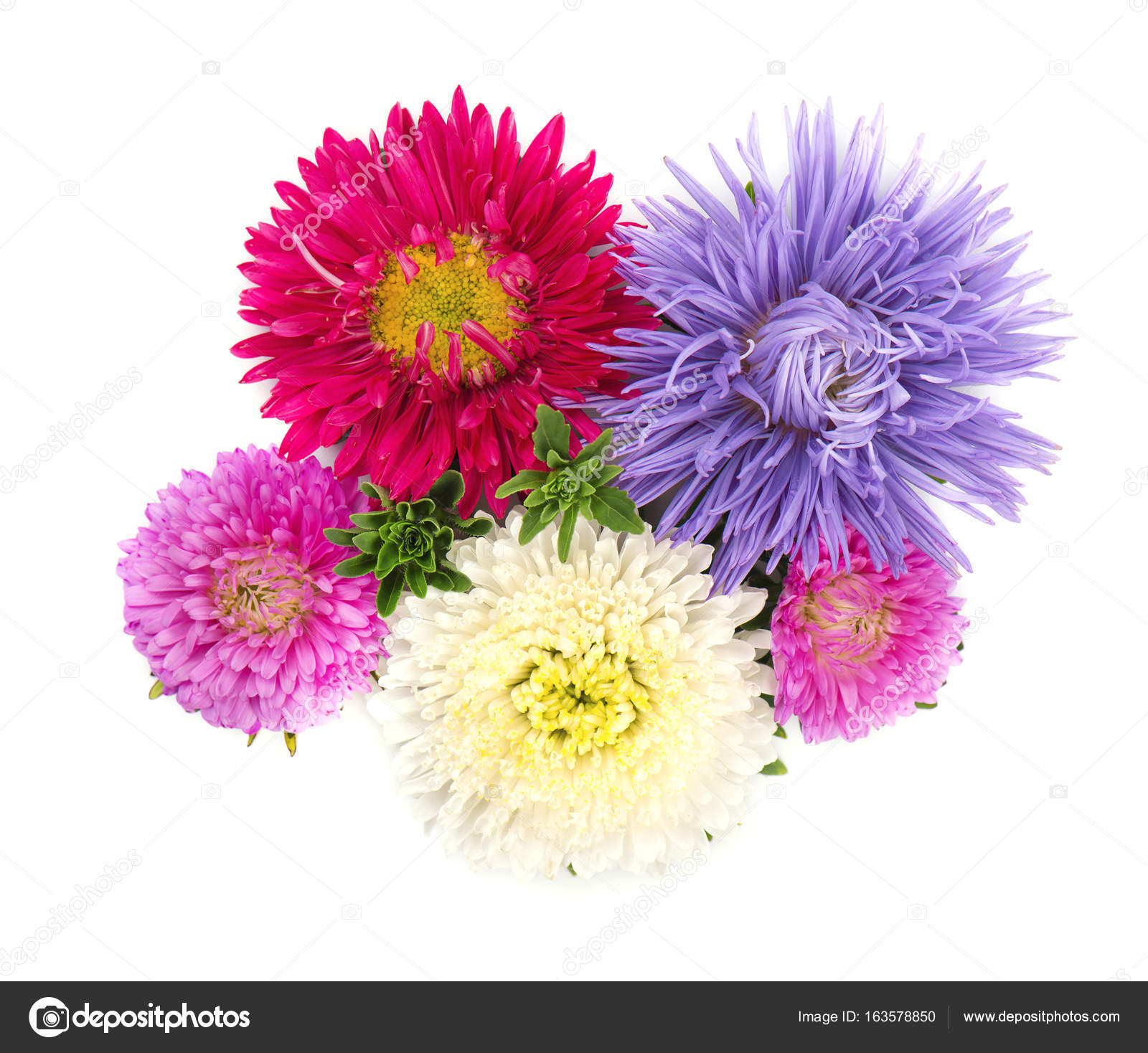Bouquet of colorful asters flowers over white background close up bouquet of colorful asters flowers over white background photo by vandycandy izmirmasajfo