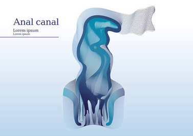 Abstract illustration of anal canal