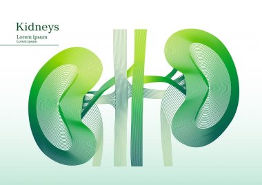 Abstract green illustration of kidneys