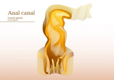 Abstract yellow illustration of anal canal