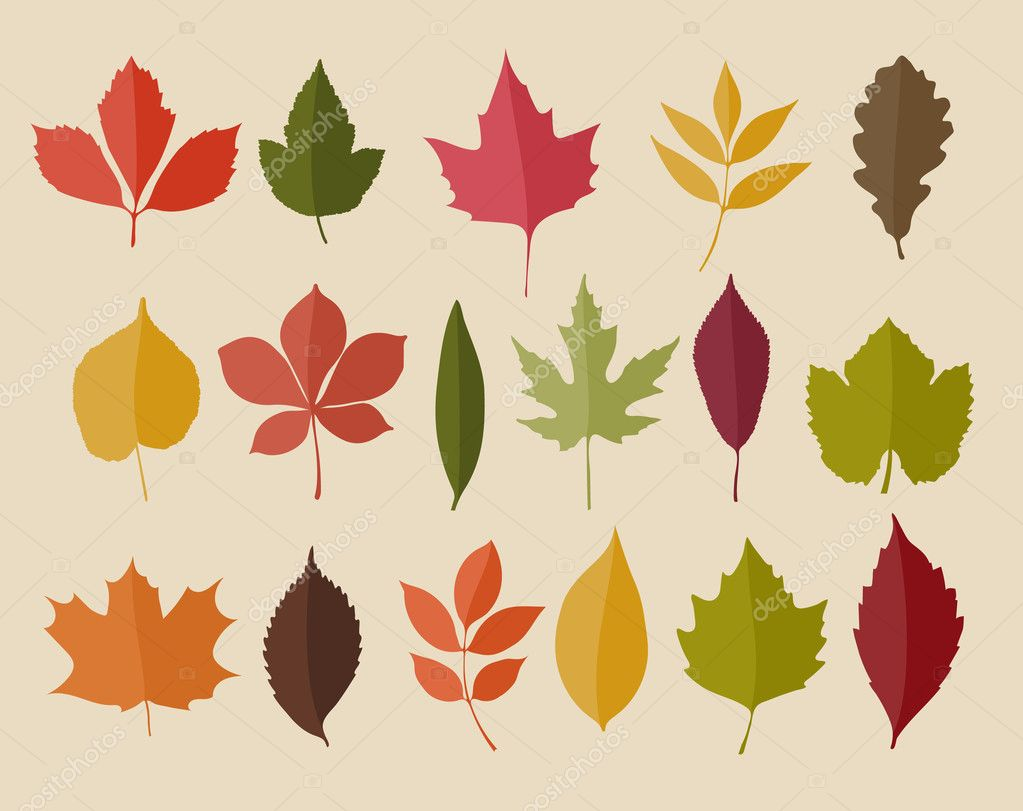 Set of isolated autumn colored leaves