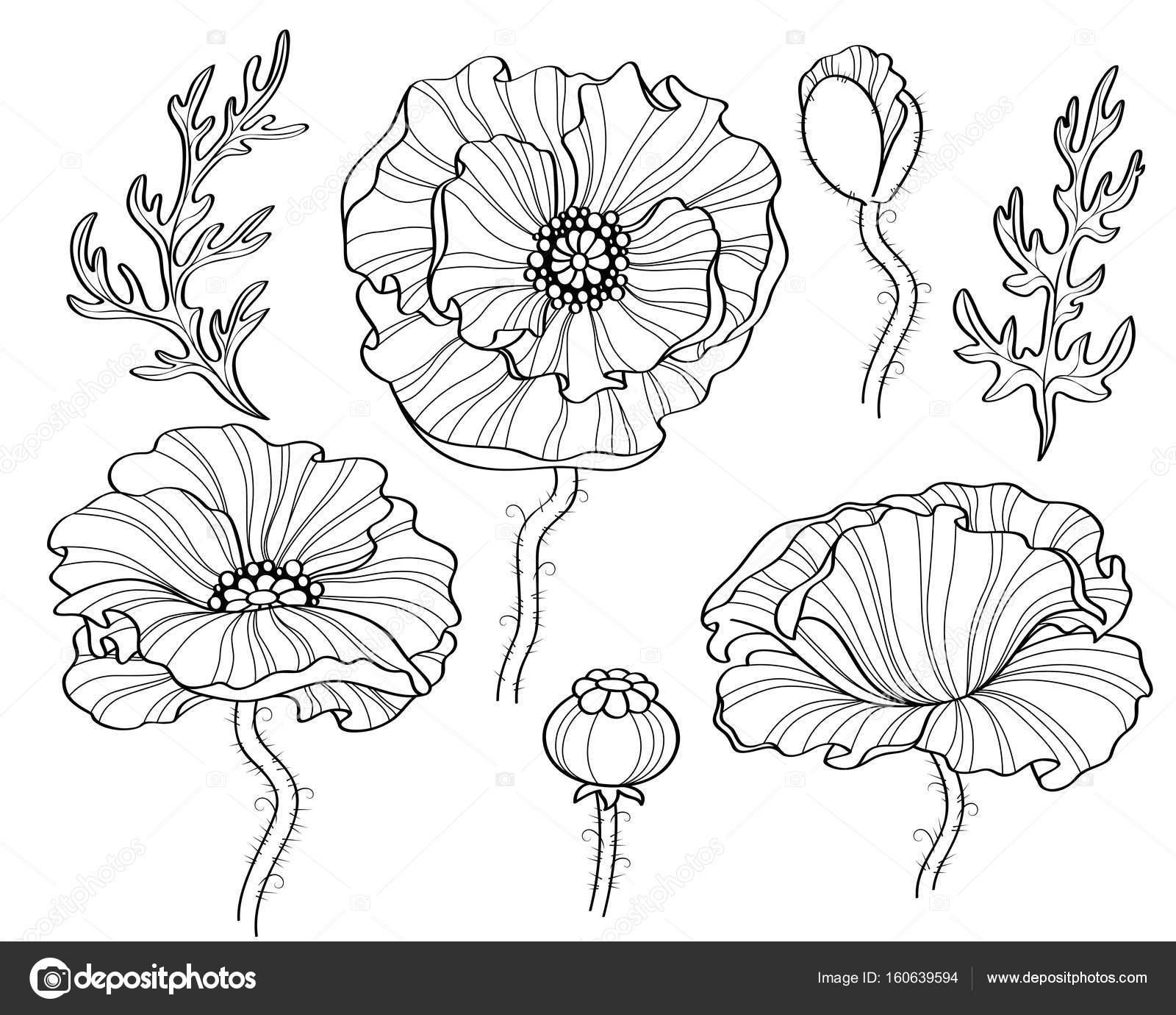 Poppy flowers black and white illustration line art stock vector poppy flowers black and white illustration line art stock vector mightylinksfo