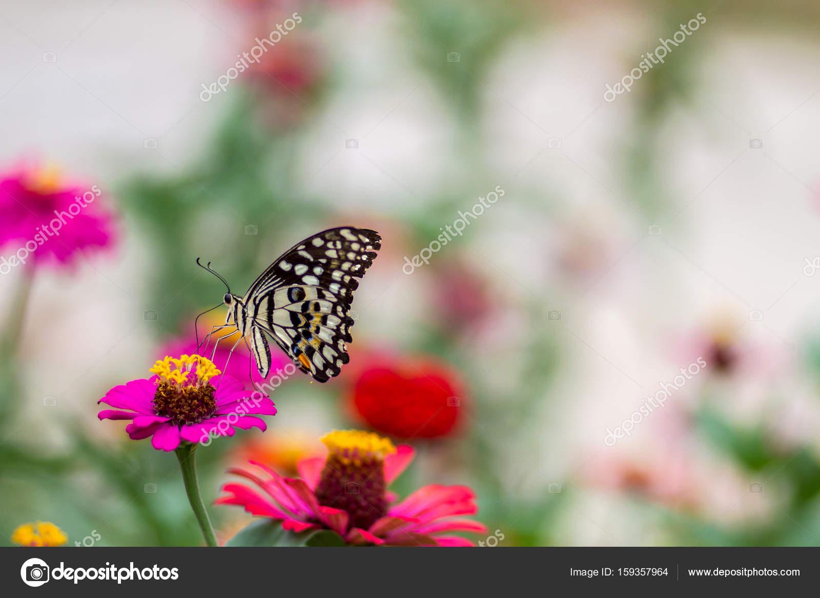 Beau papillon avec fleur et fond flou photographie c25 - Papillon fleur ...