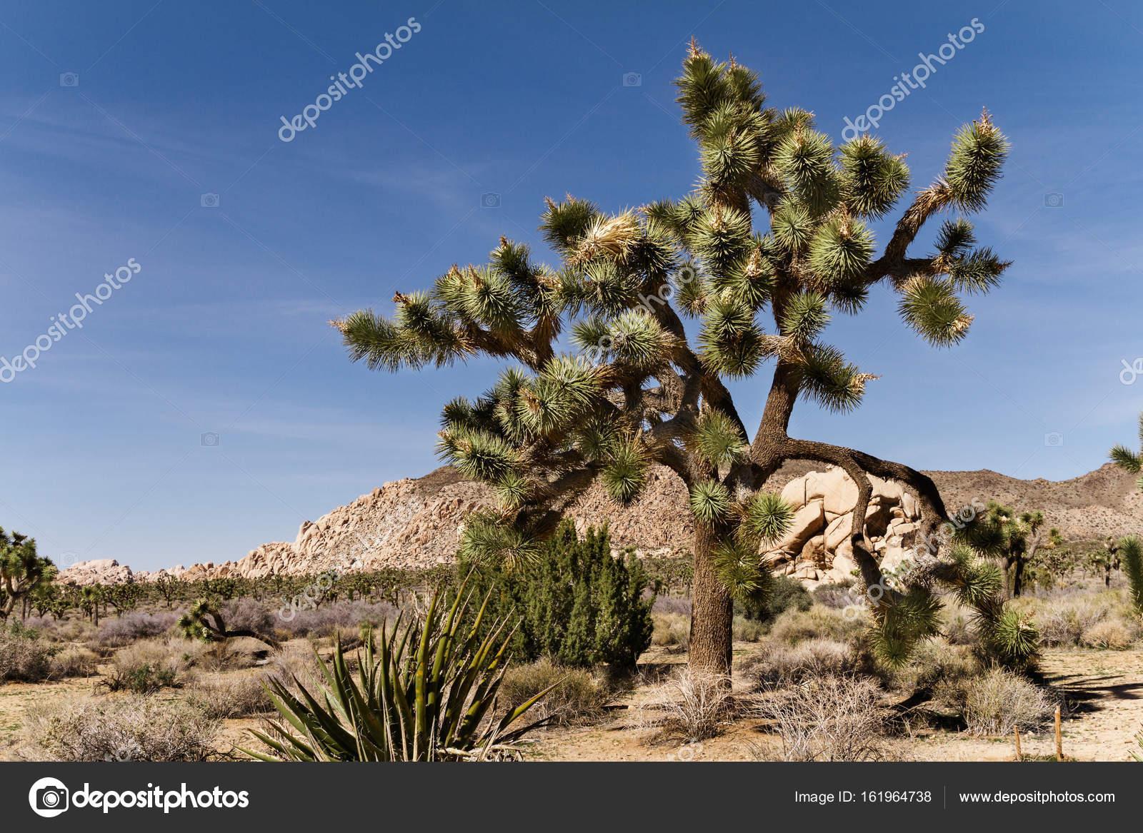 Flora y fauna de estados unidos yahoo dating