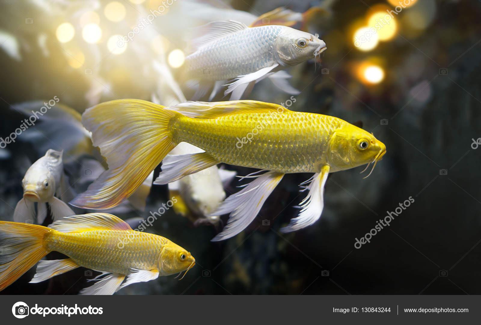 goldenen und silbernen Farben Fische Gruppe in einer ...