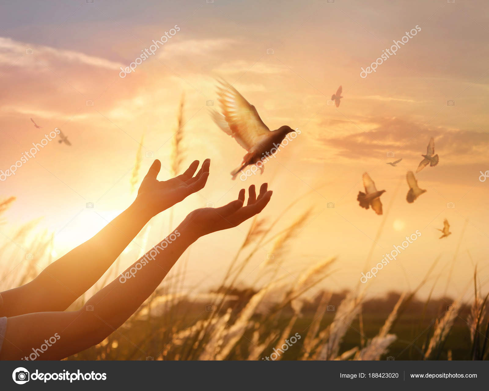Woman Praying And Free The Birds Enjoying Nature On Sunset
