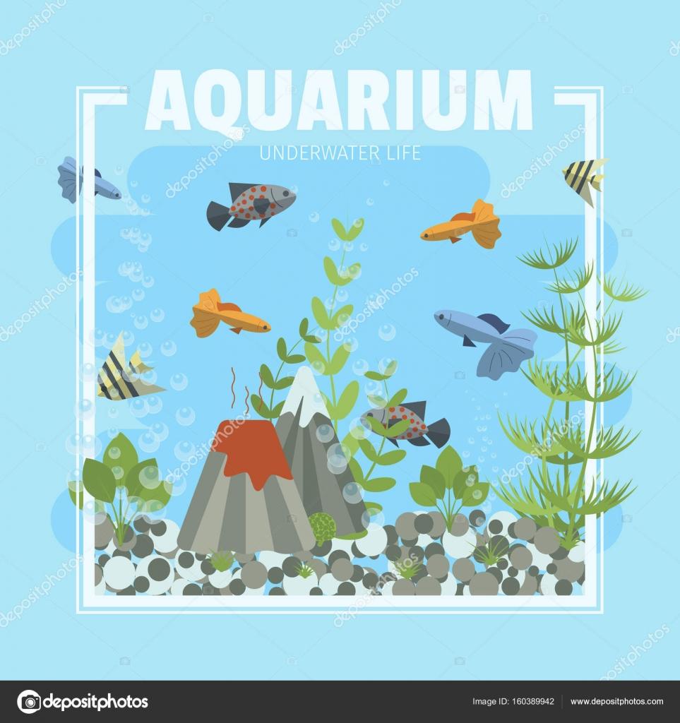 Cartoon Vektorgrafik Heim Aquarium mit Wasser, Pflanzen und Fische ...