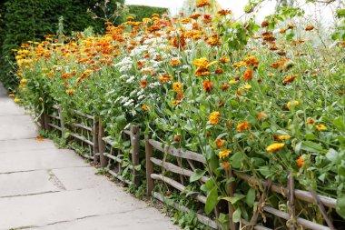 Orange Marigold flower growing inside a wooden fence