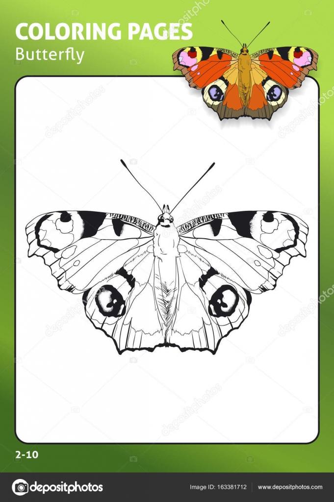 Tropischer Schmetterling Malvorlagen — Stockvektor © Diidik #163381712