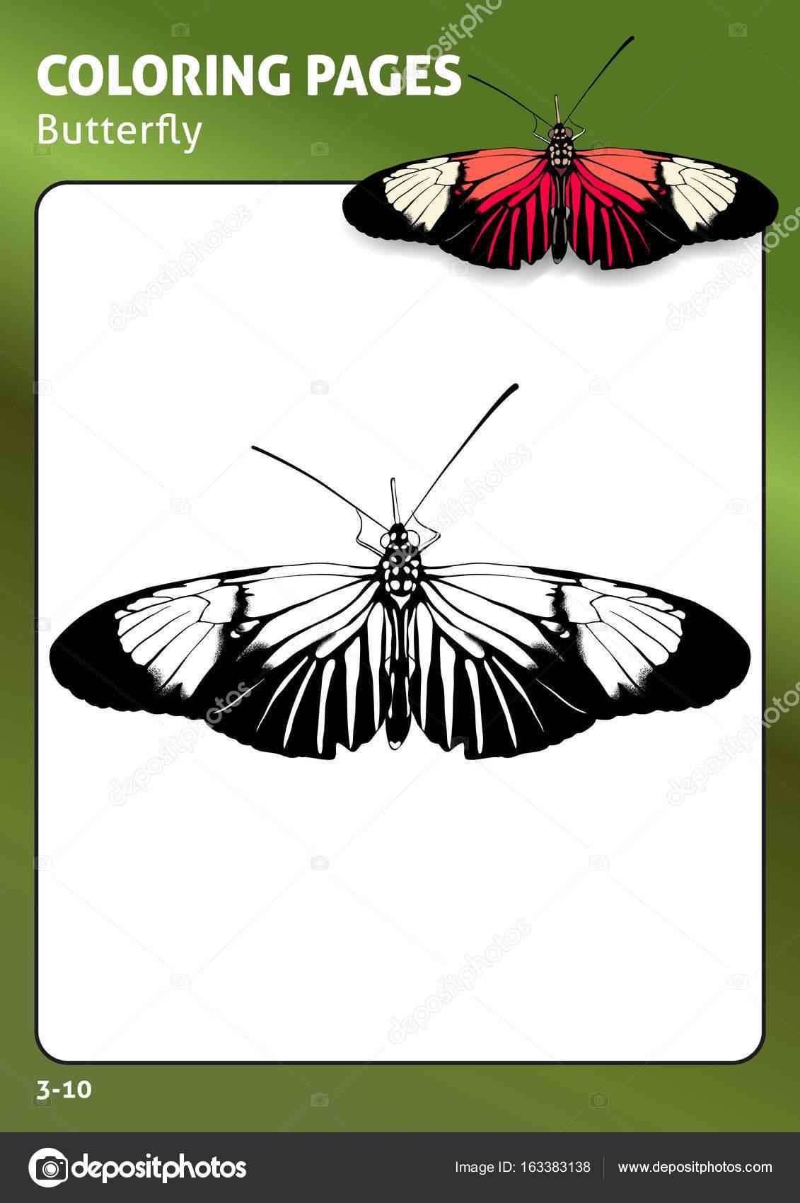 Tropischer Schmetterling Malvorlagen — Stockvektor © Diidik #163383138