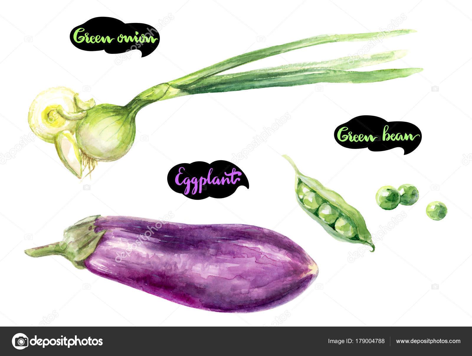 Erbe Spezie Set Acquerello Cucina Acquerello Cipolla Verde Melanzane ...
