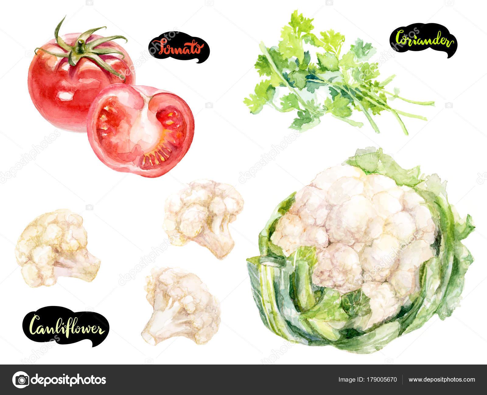 Herbs Spices Kitchen Watercolor Set Cauliflower Coriander Tomatoes ...