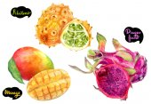 Dragon fruit, mango, kiwano hand drawn watercolor illustration isolated on white background