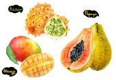 Papaya, mango, kiwano hand drawn watercolor illustration isolated on white background