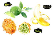 Fotografie Kiwano, lime, banana hand drawn watercolor illustration isolated on white background.