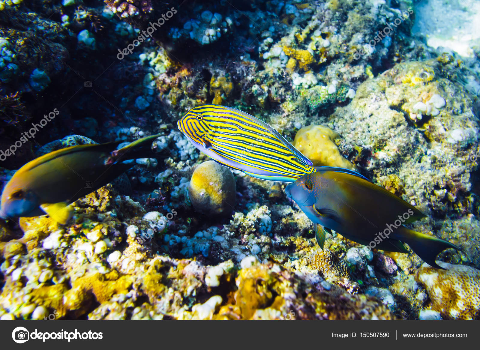 colorful corals and fishes at ocean depth — Stock Photo © Keola ...
