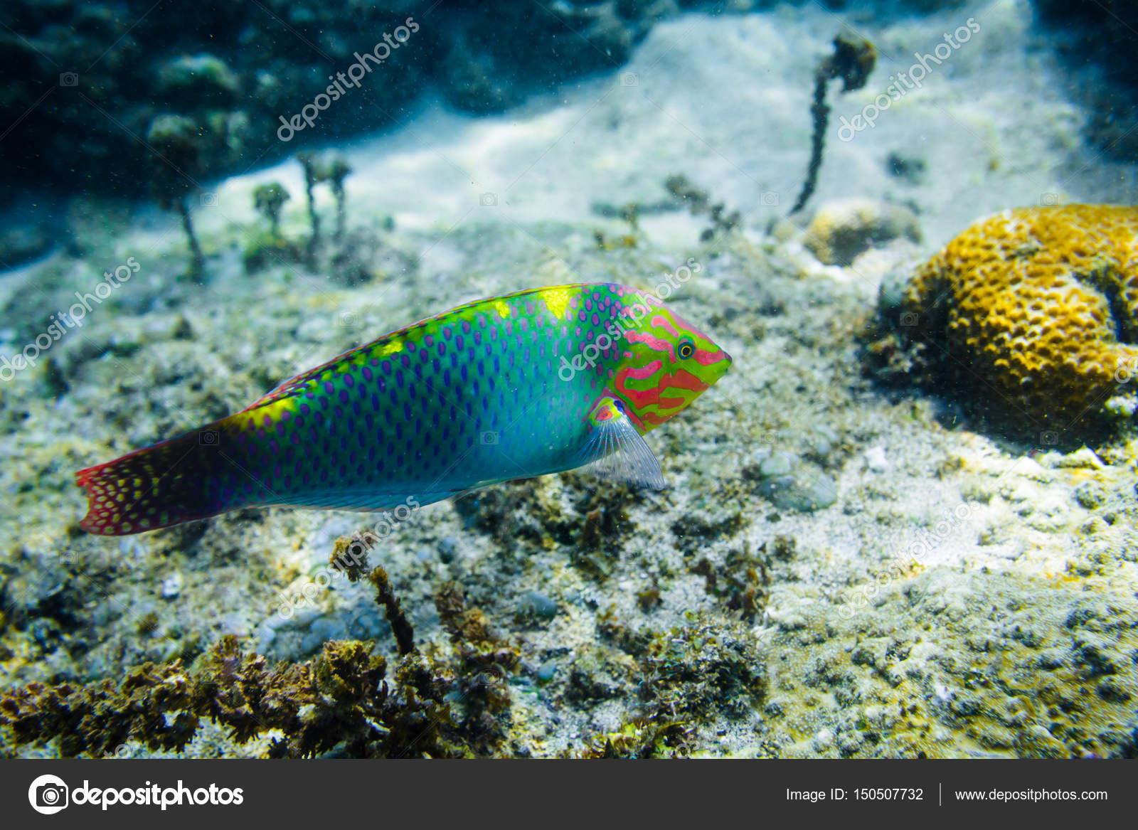 colorful corals and fish at ocean depth — Stock Photo © Keola #150507732