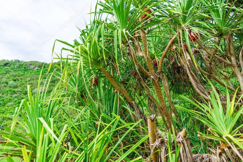 tropical big palm trees on island