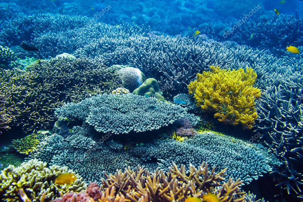 colorful corals and fishes at ocean depth