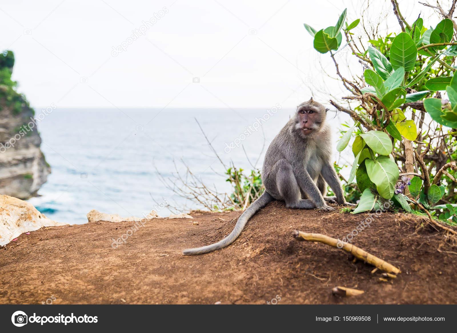 Фото обезьян на пляже 50