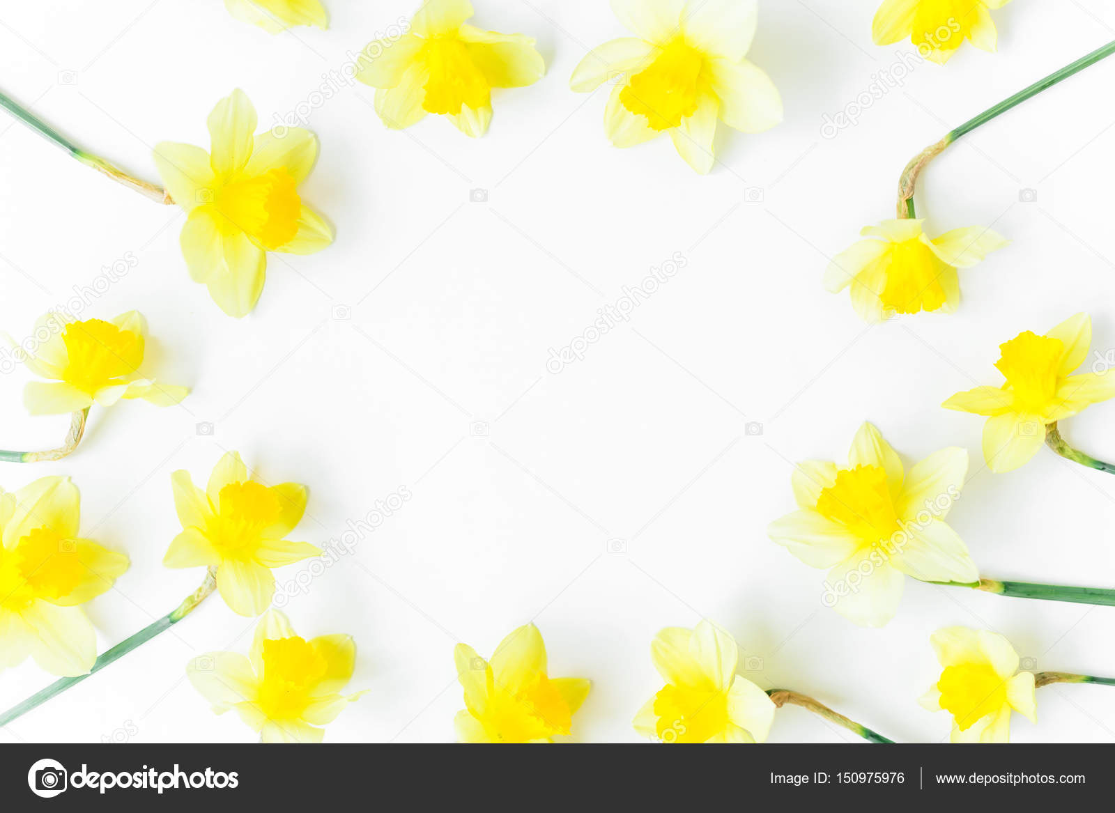 Beautiful Yellow Flowers In Round Frame Stock Photo Keola 150975976