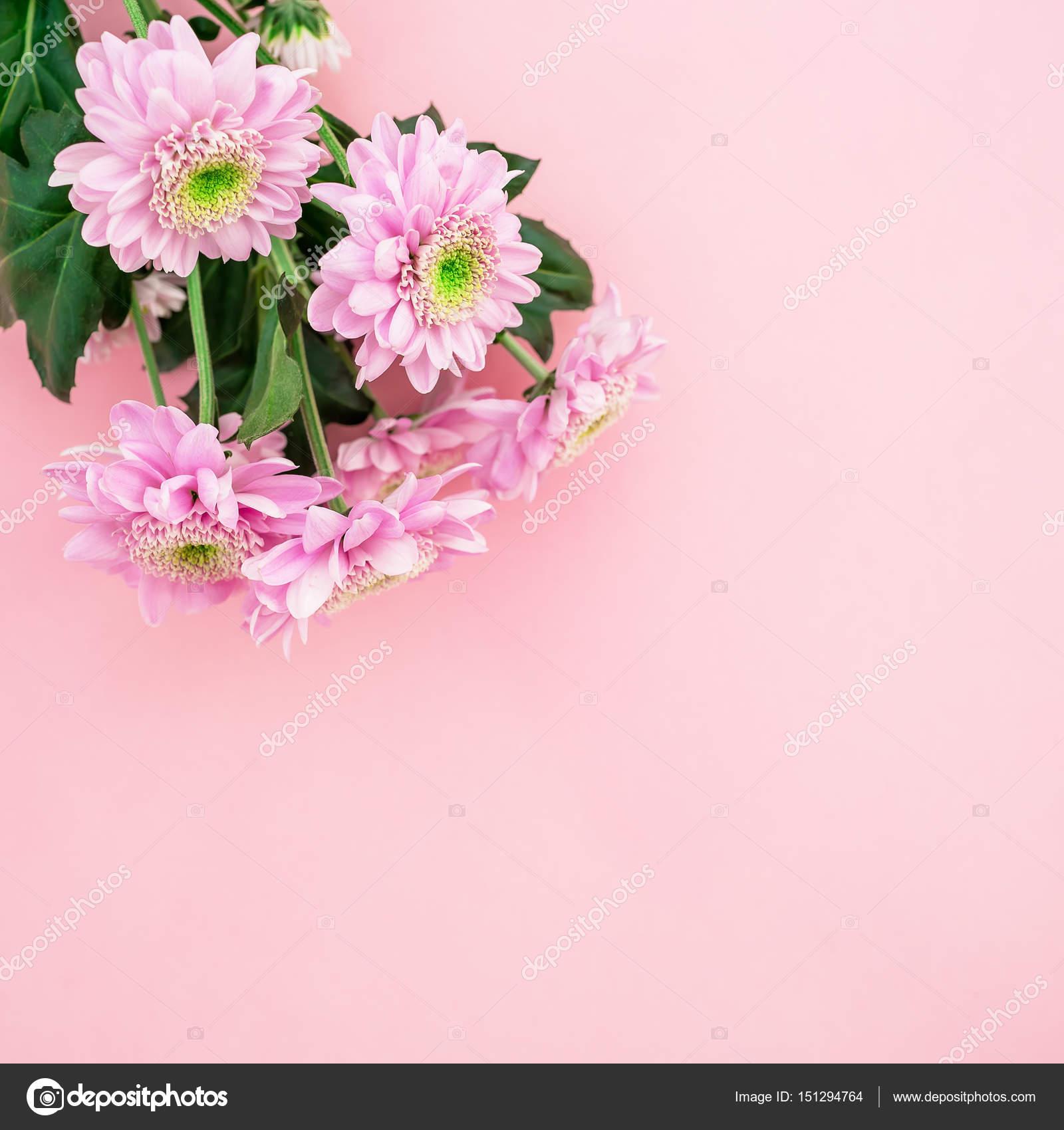 Bellissimi Fiori Su Sfondo Rosa Foto Stock Keola 151294764