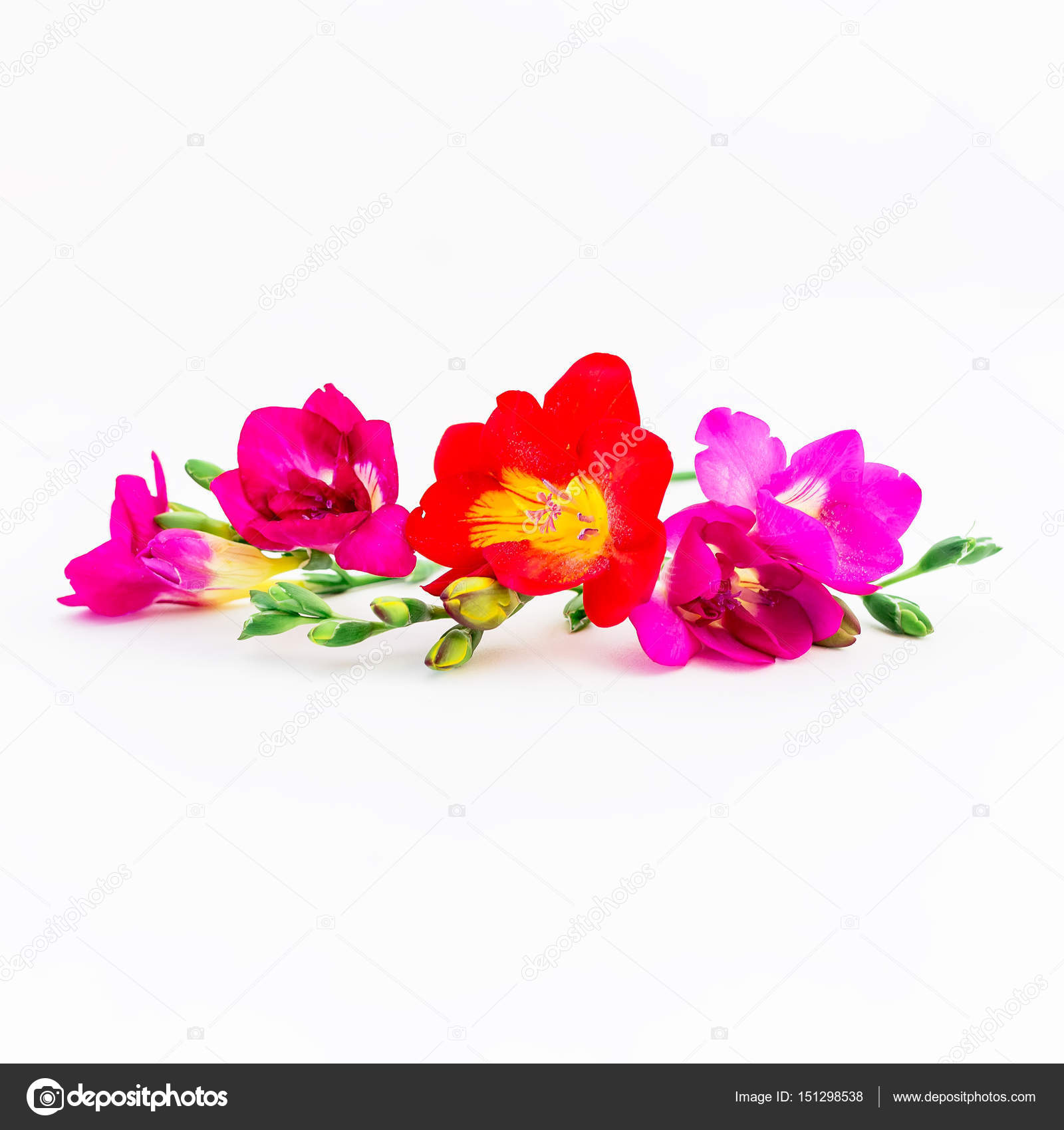Beautiful Flowers On White Background Stock Photo Keola 151298538