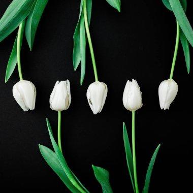 Tender tulip flowers