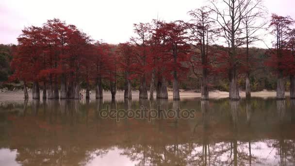Červený cypřiše, podzimní krajina s jezerem