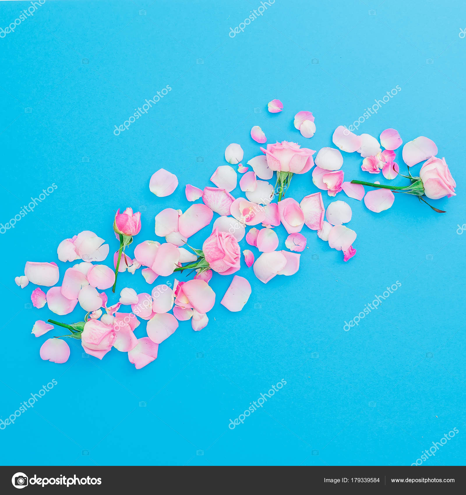 19ab4999ae41b Floral Frame Roses Buds Petals Blue Background Flat Lay Top — Stock Photo
